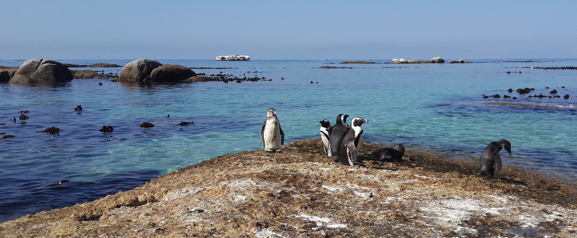 Penguins View Guesthouse